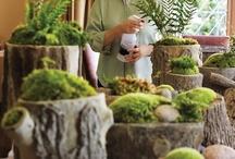 Ferns, Moss & Terrariums / by Kellie Hoople