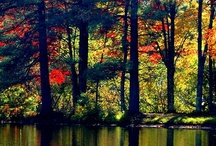 Beautiful Autumn  / I am so inspired by the countless pics of Autumn on Pinterest. - enjoy! ⛵⛵⛵ Dan Trepanier's Favorite Pinterest Pics! / by Dan Trepanier
