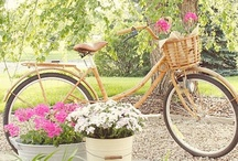 Bikes / by tammy inman
