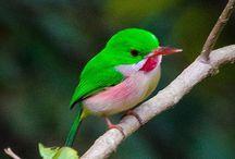 birdies / by tammy inman