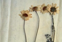 A thing for daisies / by Donna Piranha