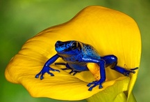 Dragonflies, Mushrooms and frogs oh my :) / A few of my favorite things / by Denise Angrignon