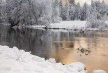 Winter / by Alex C. {Hydrangea Girl}