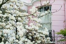 Spring / by Alex C. {Hydrangea Girl}