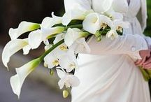 Wedding Bouquets / by Kathy Merlino