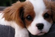 puppy / by Jessica Gallinaro