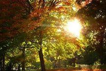 Fall  / by Trisha Benson-Priesmeyer
