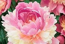 Flower love / by Trisha Benson-Priesmeyer