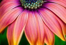 Macro Flowers / by Doug