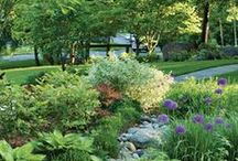 Gardening / by Kathy Stewart
