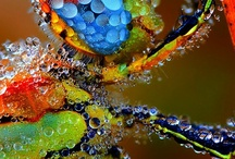 Insect Love / by Debra Bickford