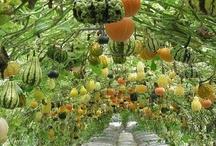 Vertical Gardening / by Bonnie Irving