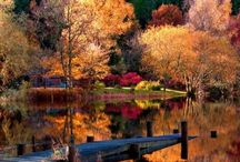 Fall / by Robin Kiser