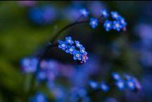 Flower Garden / by Jessica Nevala
