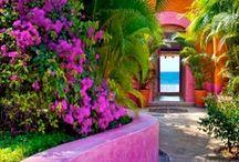 a beautiful garden  / outdoor loveliness!  / by Robin