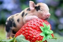 cutie pie / All things cute & squee-worthy. / by Susan Gregg Koger