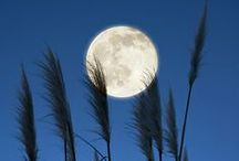 The Lovely  Moon / We see the moon in various shapes and colors.  Here are some wonderful and lovely shots. / by Carole Bradley