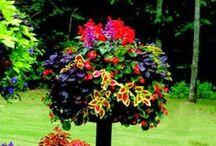 Gardening finds / by Kitty Desrosiers