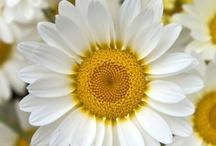 "{ Flowers } / Earth laughs in flowers.  ~Ralph Waldo Emerson, ""Hamatreya"" / by Pam Smith"