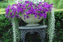-Garden Planters and Container Gardening / by Sam Pryor