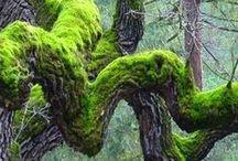 Moss  Gardening / Well, not all relate to Moss Gardening....  / by Sam Pryor