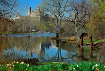 Dreams of Central Park / by Karen Sather