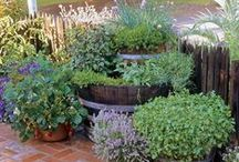 For the Garden / Landscaping ideas for urban garden gals, like myself. this year, I really want to get creative with the garden and plan on going beyond just containers! :) / by Kimberly / Two Chic Chicks