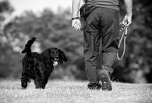 Dogs / Training, breed information, diys, art, and cool products. / by Bwabbit Price