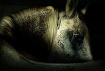 Animals / by Catherine Browne