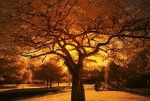 Trees / by Nadine Zawacki