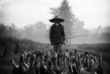 China Inspirations / by Heidi Kaiser