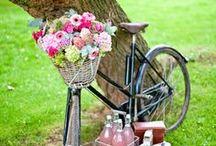 Bike / by Ritsuko