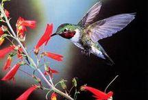 Birds of a Feather / by Sherri Peddicord