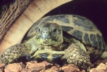 Reptile Things / I have a pet Russian (tortise...not like an actual Russian) and I plan on getting a python next year. Here are the things they need me to buy for them.  / by Danielle Renckly