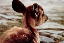 Animals / The best creatures of God.  / by Berta Viteri Ramírez