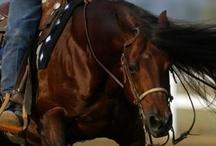 Horse Heaven! / by Jenilee Holliday