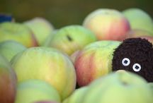 Autumn Apple Picking / I am happy to share. Please feel free to pin whatever you like with any caption you please. No daily or other limits! / by Mimmi Penguin