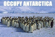 Penguin Humor / I am happy to share. Please feel free to pin whatever you like with any caption you please. No daily or other limits! / by Mimmi Penguin