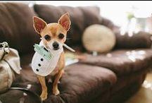 Wedding Pets / by Byron Bay Celebrant Michelle Shannon