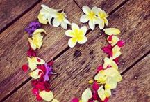 My Instagram / I love social media and Instagram is one of them - enjoy! If you want to start following me - here is my link... http://instagram.com/byronbaycelebrant / by Byron Bay Celebrant Michelle Shannon