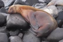 Galapagos Islands  / by ElderTreks