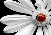 I love Poka Dots / by Shannon Rouse Beck