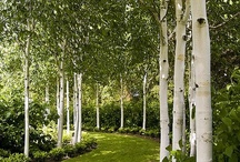 dwelling: garden design / by Lindasha