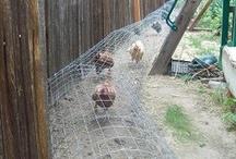 Country Life Chicken Stuff / chicken coops, chicken art, chicken food, chicken tips  / by Oh Boy, Cato!