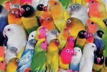 #Aves# / by socorro bezerra