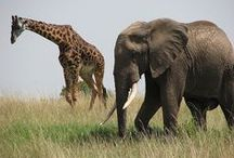 Elephants & Giraffes / Big & Beautiful with Big hearts / by Laurie Shields