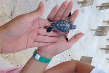Turtle Protection Program / by Flamingo Cancun Resort