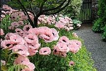 garden / by Posie Star