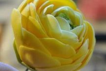 Gumpaste flowers / by alejandra hernandez guzman