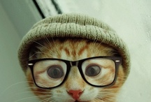 Animals in Glasses / by ICO